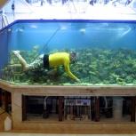 Профессиональное обслуживание аквариумов, Новосибирск