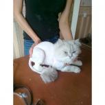услуги для животных, Новосибирск