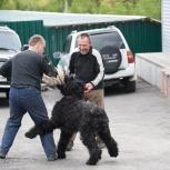 Внимание! Дрессировка собак, Новосибирск