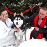 Свадебный фотограф, фотограф профессиональный, фото на свадьбу, Новосибирск