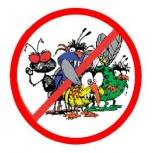 Надоели муравьи, клопы и тараканы?, Новосибирск