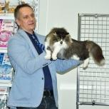 Великолепные котята - настоящие Норвеги!, Новосибирск