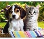 Стрижка животных ( кошек , собак, кроликов), Новосибирск