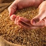 Продам пшеницу, Новосибирск