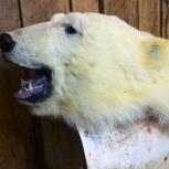 Выделка меха. Выделка шкуры медведя, Новосибирск