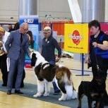 Дрессировка собак. Шоу-тренинг, Новосибирск